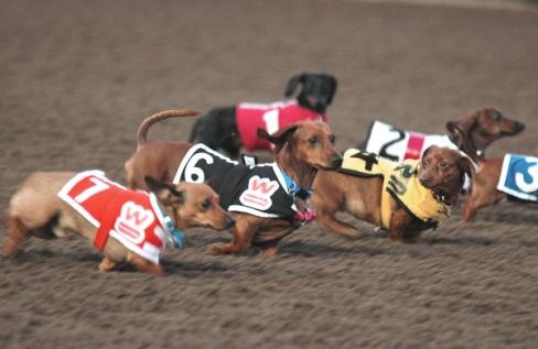 British Race Track Delves into the Casino Market